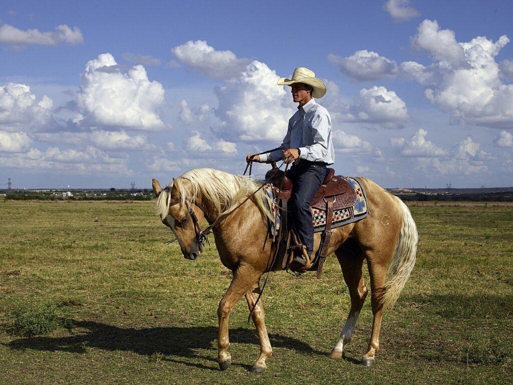 cowboy, quarter horse, trainer